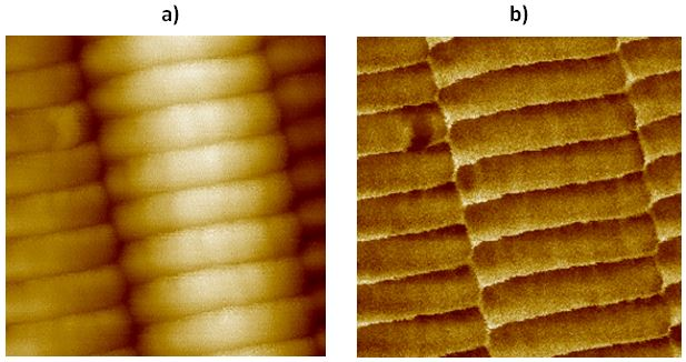 161223-afm-image-collagen-fibrils