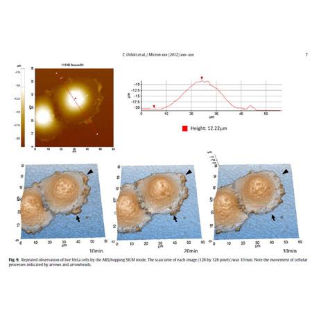 Dynamics of Live Hela Cells