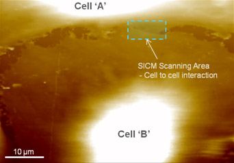 live-whole-cell-imaging