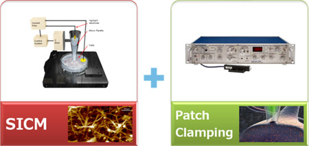 targeted-patch-clamping