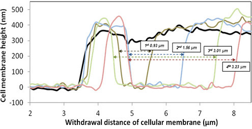 withdrawl-distance-of-cellular-membrane