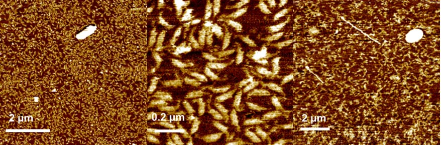 200810-oct-images-xe-afm-dna-origami